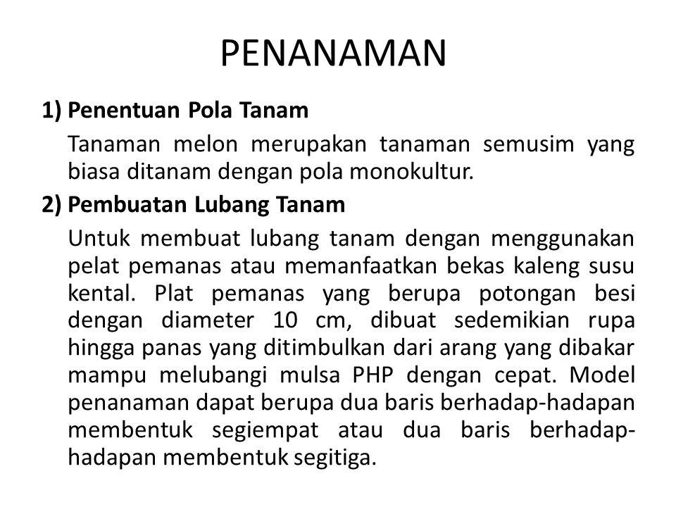 PENANAMAN 1) Penentuan Pola Tanam Tanaman melon merupakan tanaman semusim yang biasa ditanam dengan pola monokultur. 2) Pembuatan Lubang Tanam Untuk m