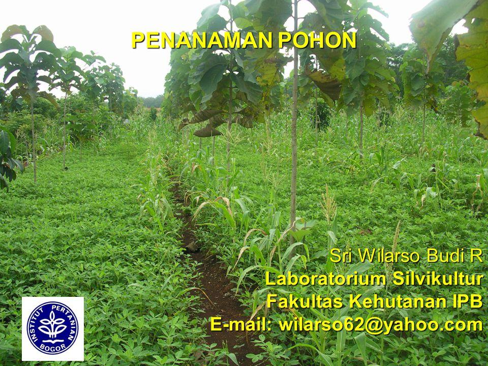 Sri Wilarso Budi R Laboratorium Silvikultur Fakultas Kehutanan IPB E-mail: wilarso62@yahoo.com PENANAMAN POHON