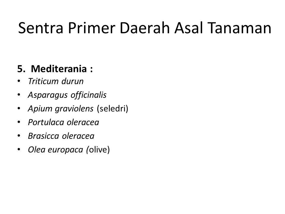 Sentra Primer Daerah Asal Tanaman 5. Mediterania : Triticum durun Asparagus officinalis Apium graviolens (seledri) Portulaca oleracea Brasicca olerace