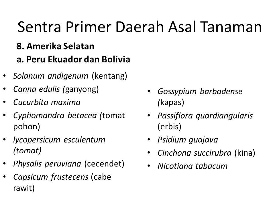 Sentra Primer Daerah Asal Tanaman 8. Amerika Selatan a. Peru Ekuador dan Bolivia Solanum andigenum (kentang) Canna edulis (ganyong) Cucurbita maxima C