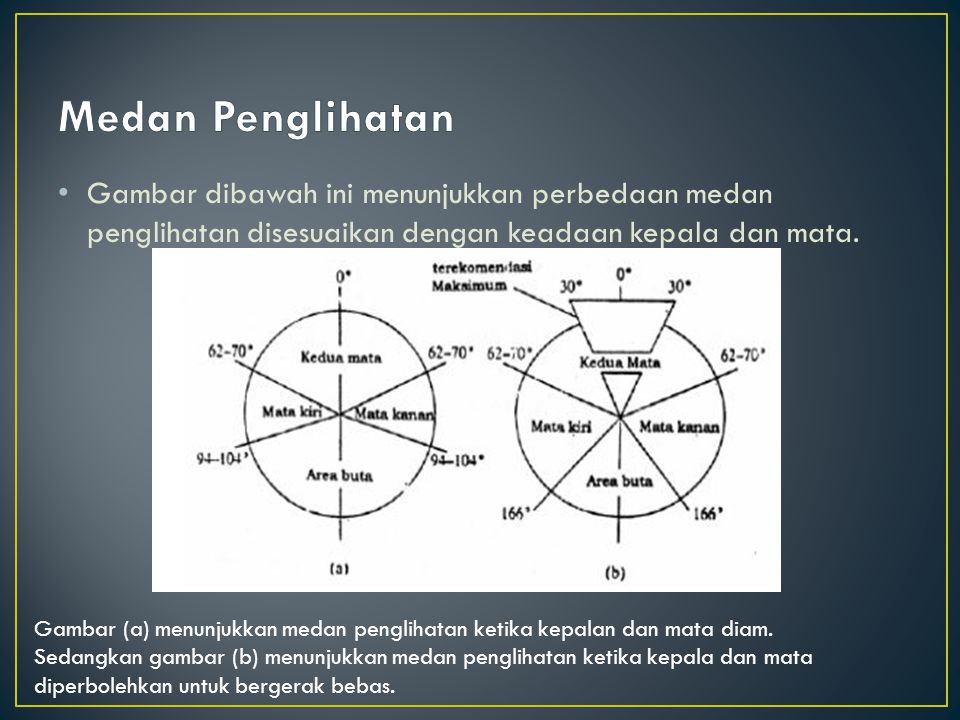 Gambar dibawah ini menunjukkan perbedaan medan penglihatan disesuaikan dengan keadaan kepala dan mata. Gambar (a) menunjukkan medan penglihatan ketika
