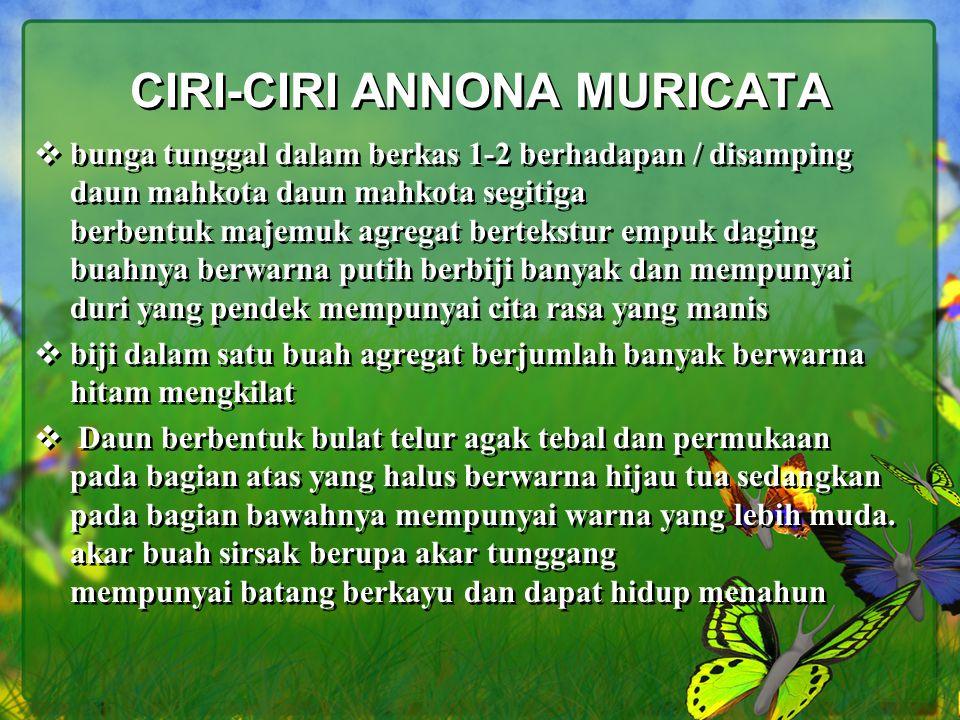 CIRI-CIRI ANNONA MURICATA  bunga tunggal dalam berkas 1-2 berhadapan / disamping daun mahkota daun mahkota segitiga berbentuk majemuk agregat berteks
