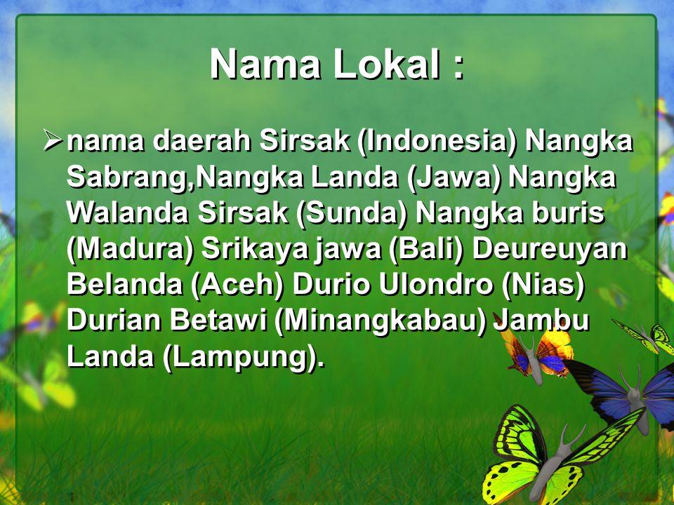 Nama Lokal :  nama daerah Sirsak (Indonesia) Nangka Sabrang,Nangka Landa (Jawa) Nangka Walanda Sirsak (Sunda) Nangka buris (Madura) Srikaya jawa (Bal