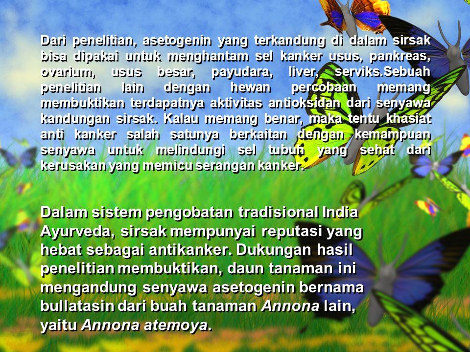 Distribusi(penyebaran) Sirsak (Annona Muriata) merupakan tanaman yang berasal dari Karibia, Amerika Tengah dan Amerika Selatan.Tanaman ini ditanam secara komersial untuk diambil daging buahnya.