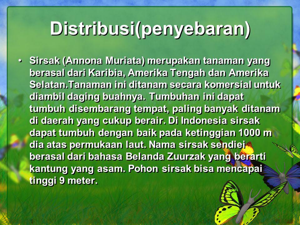 Distribusi(penyebaran) Sirsak (Annona Muriata) merupakan tanaman yang berasal dari Karibia, Amerika Tengah dan Amerika Selatan.Tanaman ini ditanam sec