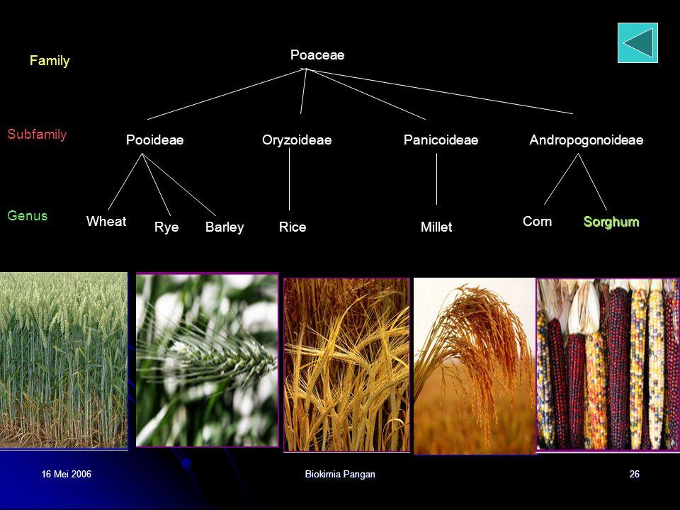 16 Mei 2006Biokimia Pangan26 Poaceae Family Subfamily PooideaeOryzoideaePanicoideaeAndropogonoideae Genus Wheat RyeBarleyRiceMillet CornSorghum