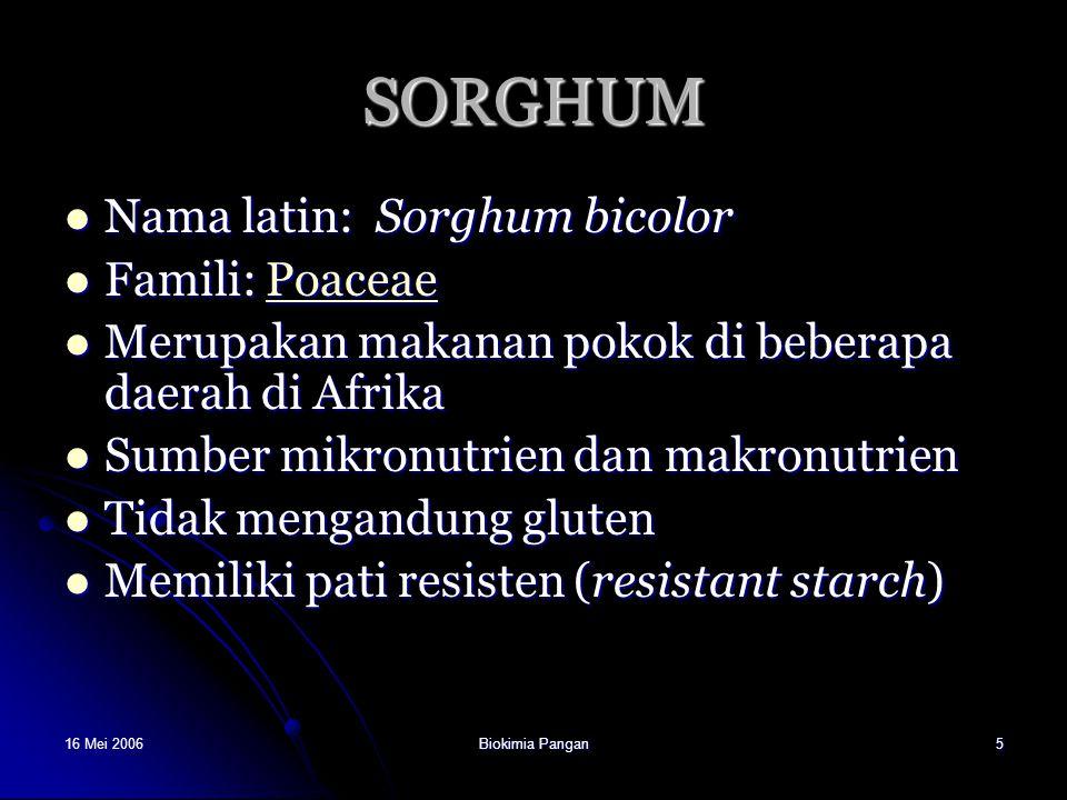 16 Mei 2006Biokimia Pangan5 SORGHUM Nama latin: Sorghum bicolor Nama latin: Sorghum bicolor Famili: Poaceae Famili: PoaceaePoaceae Merupakan makanan p