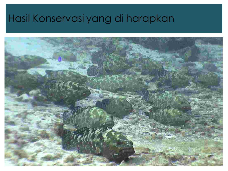 Hasil Konservasi yang diharapkan Foto kerapu yg bagus di atas terumbu karang, kalo bisa jumlahnya lebih dari satu Hasil Konservasi yang di harapkan