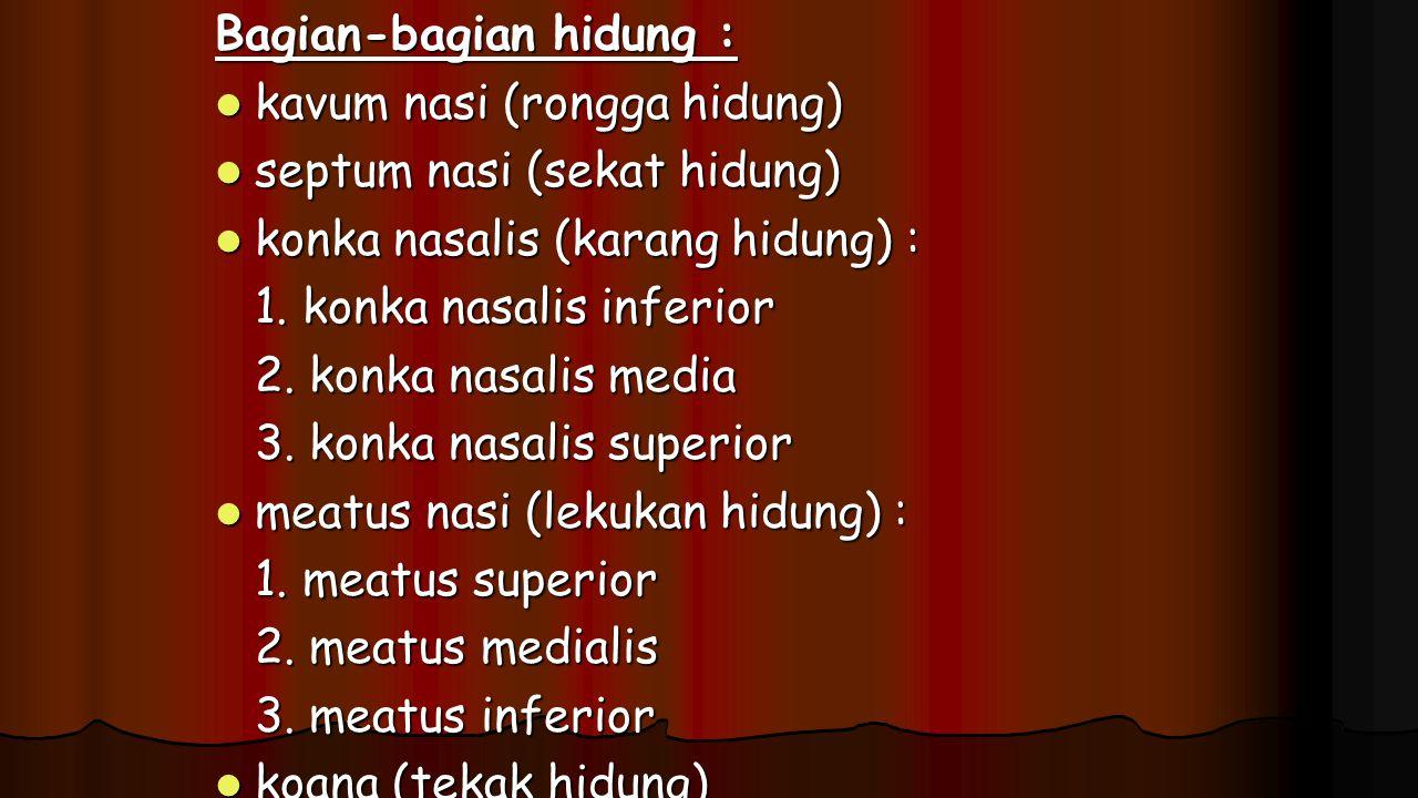 Bagian-bagian hidung : kavum nasi (rongga hidung) kavum nasi (rongga hidung) septum nasi (sekat hidung) septum nasi (sekat hidung) konka nasalis (kara