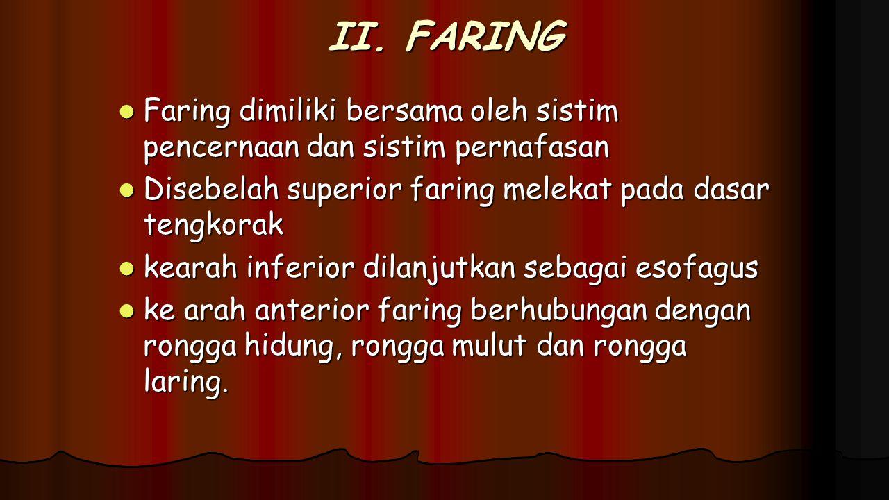 II. FARING Faring dimiliki bersama oleh sistim pencernaan dan sistim pernafasan Faring dimiliki bersama oleh sistim pencernaan dan sistim pernafasan D