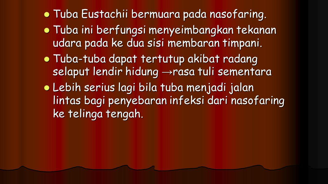 Tuba Eustachii bermuara pada nasofaring. Tuba Eustachii bermuara pada nasofaring. Tuba ini berfungsi menyeimbangkan tekanan udara pada ke dua sisi mem
