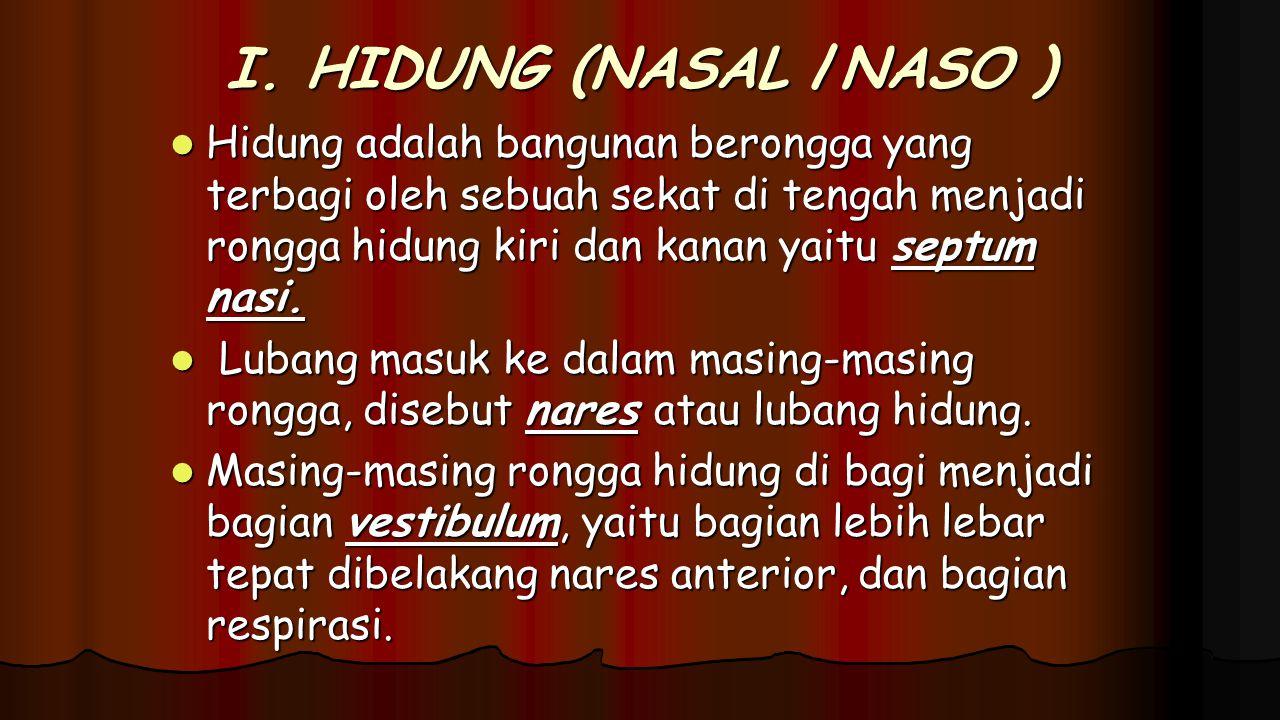 I. HIDUNG (NASAL /NASO ) Hidung adalah bangunan berongga yang terbagi oleh sebuah sekat di tengah menjadi rongga hidung kiri dan kanan yaitu septum na