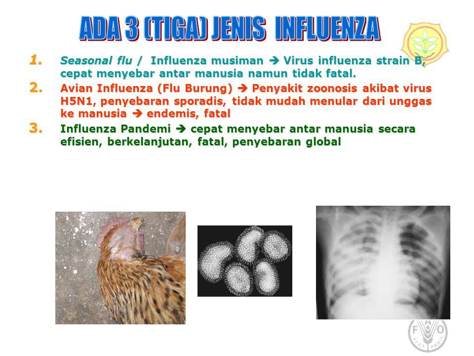 1. Seasonal flu / Influenza musiman  Virus influenza strain B, cepat menyebar antar manusia namun tidak fatal. 2. Avian Influenza (Flu Burung)  Peny