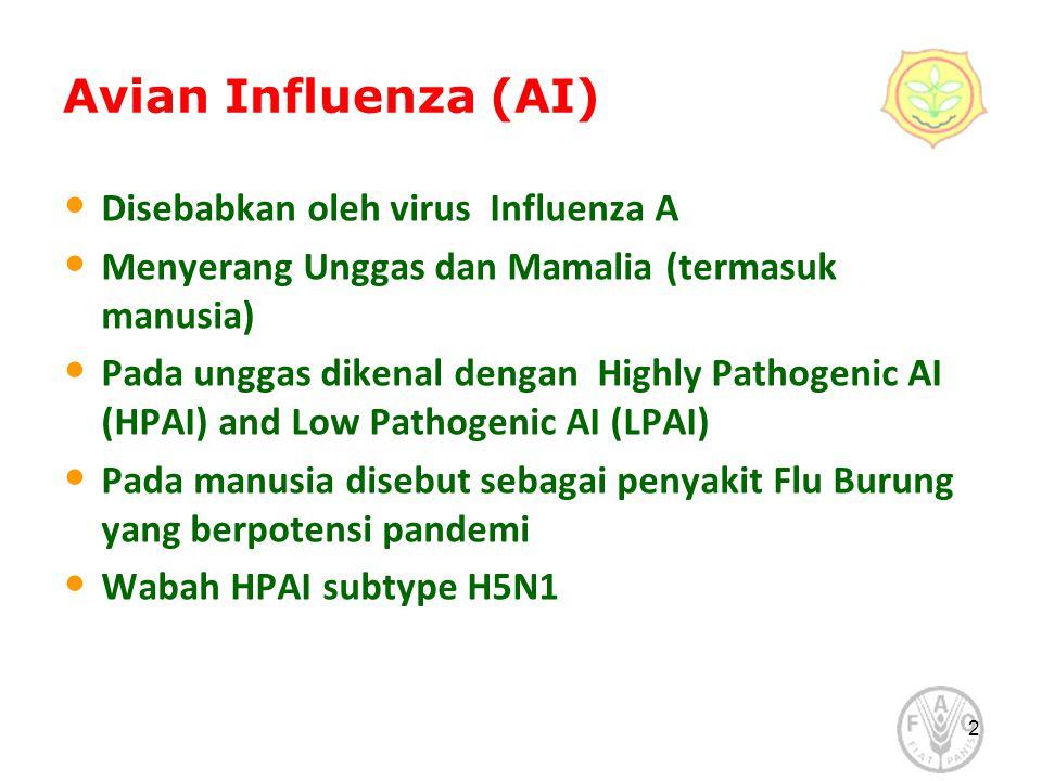 2 Avian Influenza (AI) Disebabkan oleh virus Influenza A Menyerang Unggas dan Mamalia (termasuk manusia) Pada unggas dikenal dengan Highly Pathogenic