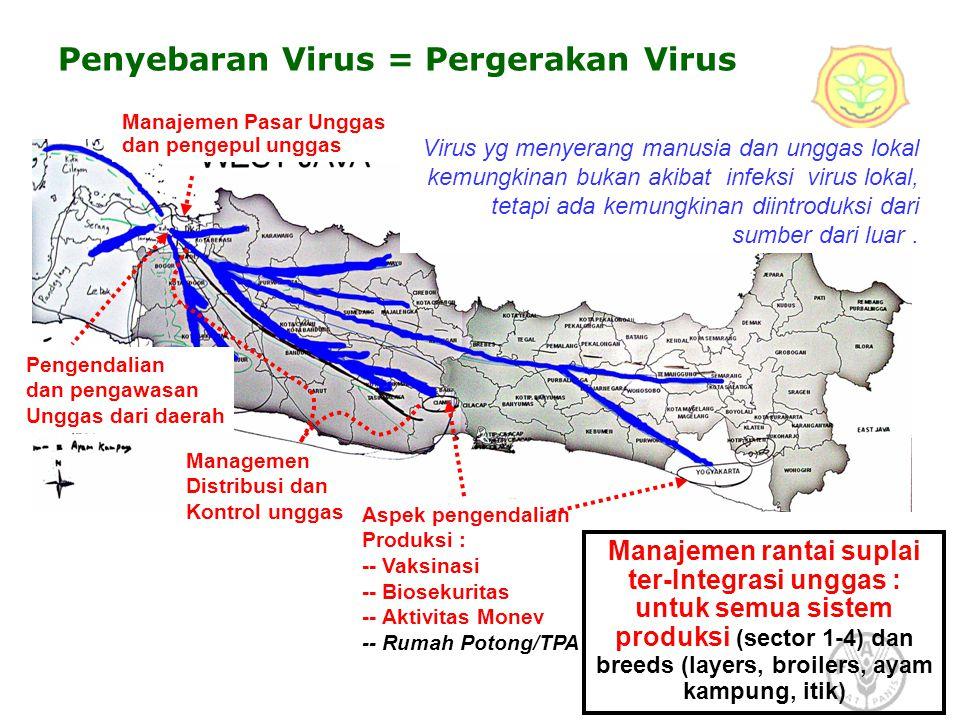 Virus yg menyerang manusia dan unggas lokal kemungkinan bukan akibat infeksi virus lokal, tetapi ada kemungkinan diintroduksi dari sumber dari luar. A