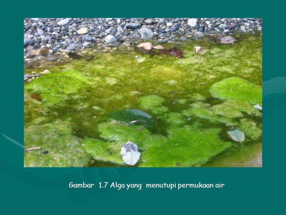 Dampak Pencemaran Air terhadap Lingkungan b. Limbah yang membutuhkan oksigen pencemaran air oleh limbah yang membutuhkan oksigen akan meningkatkan BOD