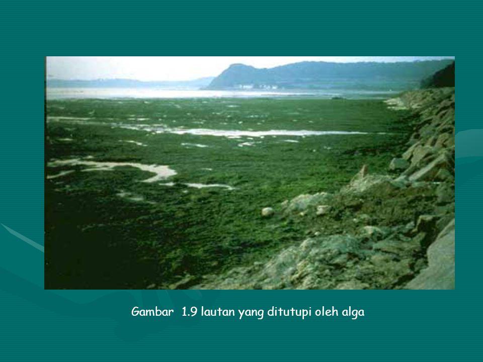Gambar 1.8 eceng gondok yang menutupi permukaan air