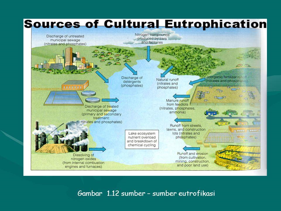 Gambar 1.11 peristiwa eutrofikasi