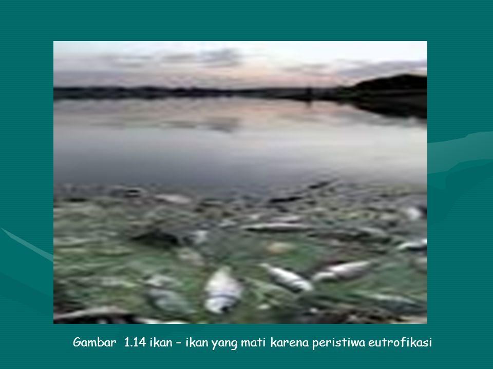 Gambar 1.13 ikan – ikan yang mati karena perairan tercemar minyak
