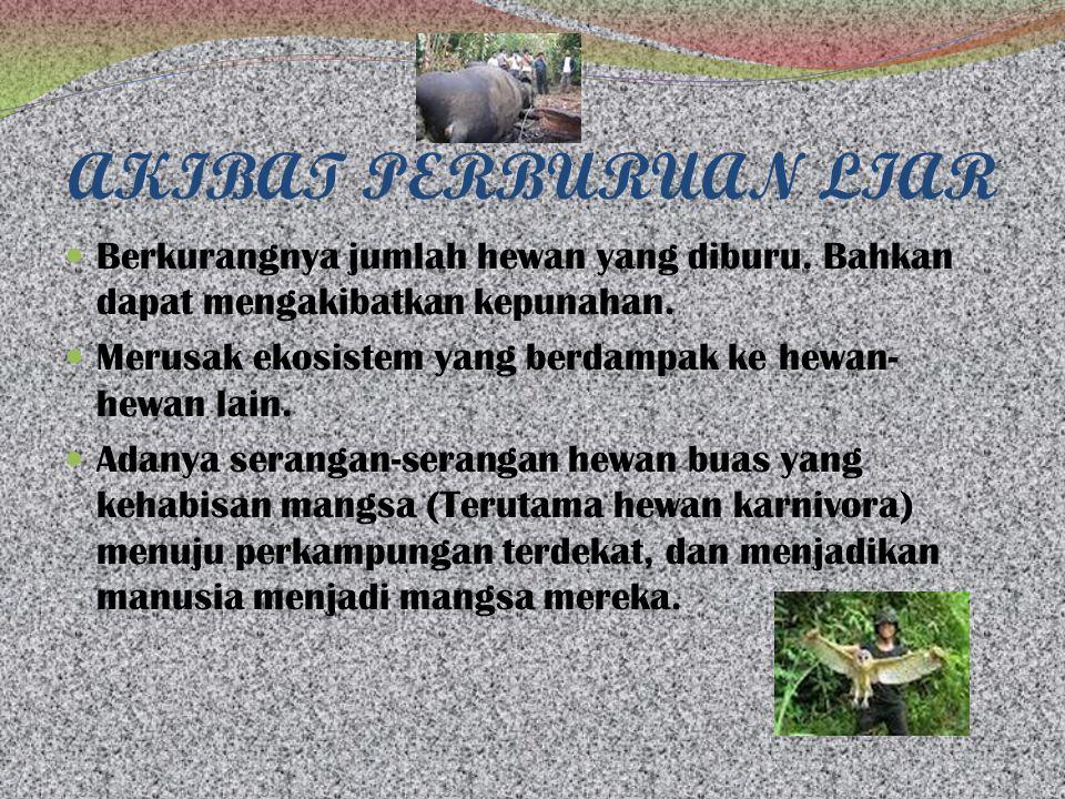 AKIBAT PERBURUAN LIAR Berkurangnya jumlah hewan yang diburu.