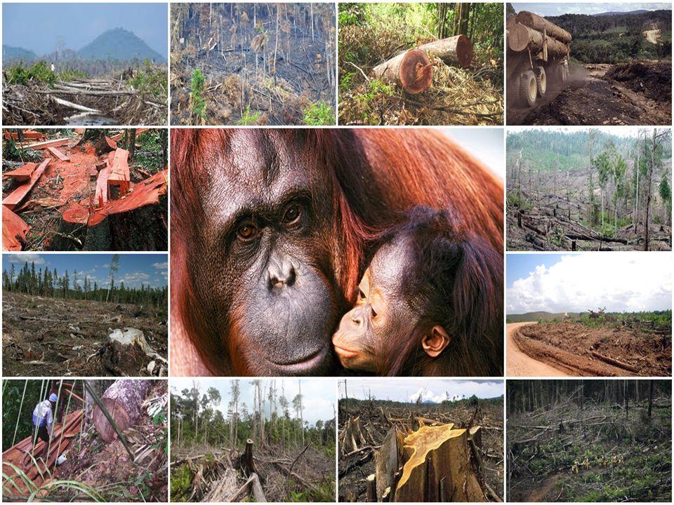 BAB III PENUTUP 3.1 KESIMPULAN Dalam karya tulis yang berjudul Penebangan pohon secara liar akan menyebabkan kerusakan alam dapat penulis simpulkan bahwa kerusakan hutan disebabkan oleh masyarakat yang tidak bertanggung jawab.