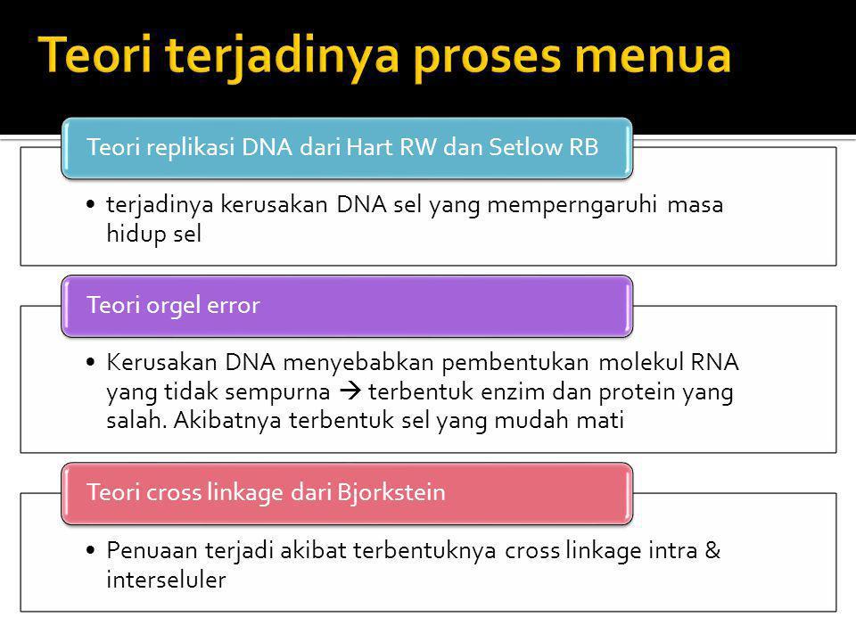 terjadinya kerusakan DNA sel yang memperngaruhi masa hidup sel Teori replikasi DNA dari Hart RW dan Setlow RB Kerusakan DNA menyebabkan pembentukan mo