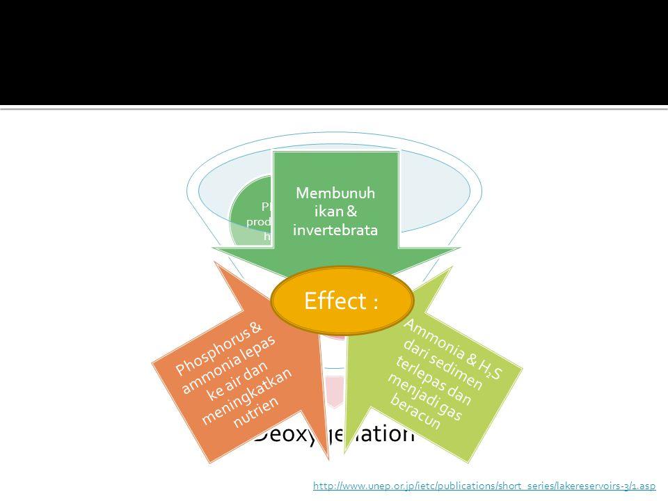 Deoxygenation Depletion of Oxygen Plant production high Membunuh ikan & invertebrata Ammonia & H ₂ S dari sedimen terlepas dan menjadi gas beracun Pho