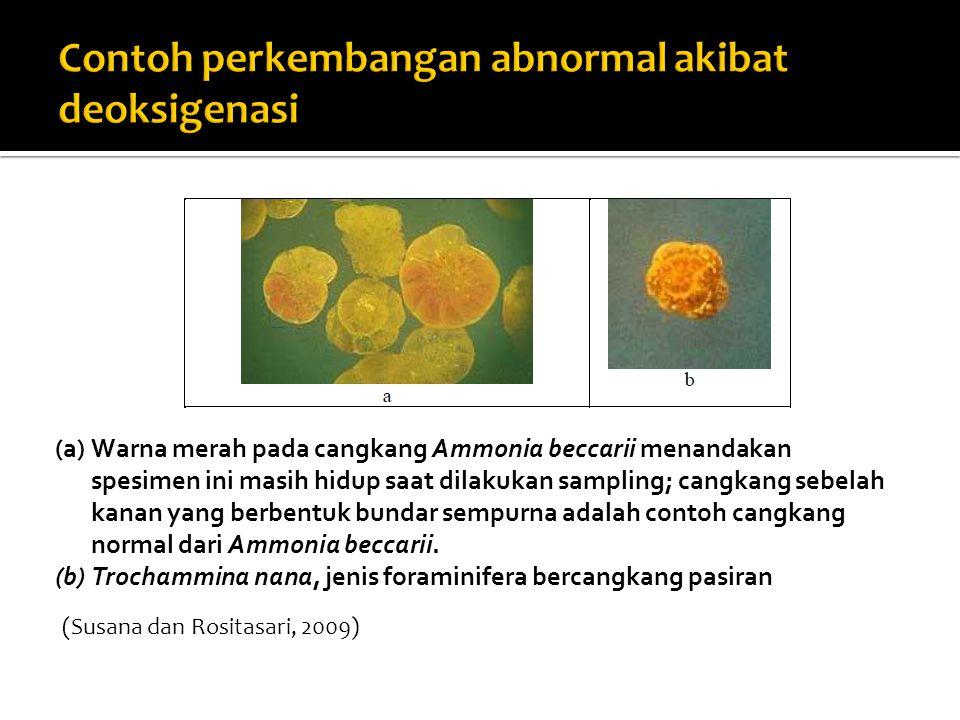 (a)Warna merah pada cangkang Ammonia beccarii menandakan spesimen ini masih hidup saat dilakukan sampling; cangkang sebelah kanan yang berbentuk bundar sempurna adalah contoh cangkang normal dari Ammonia beccarii.