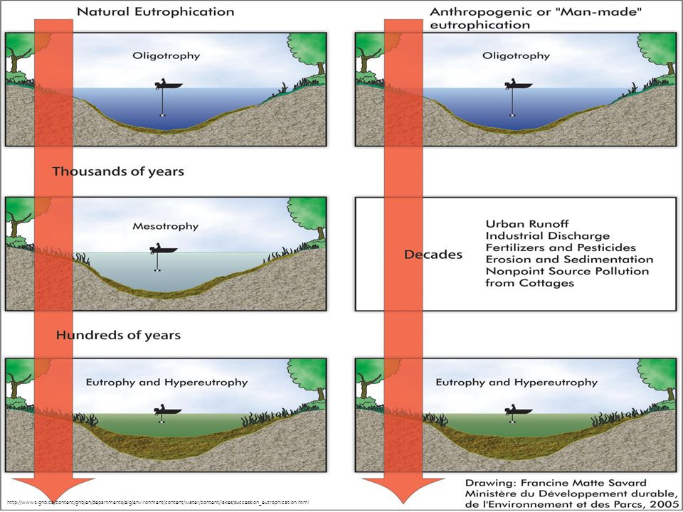 http://www2.gnb.ca/content/gnb/en/departments/elg/environment/content/water/content/lakes/succession_eutrophication.html