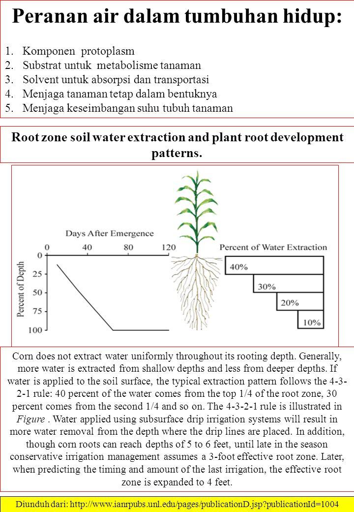Peranan air dalam tumbuhan hidup: 1.Komponen protoplasm 2.Substrat untuk metabolisme tanaman 3.Solvent untuk absorpsi dan transportasi 4.Menjaga tanam