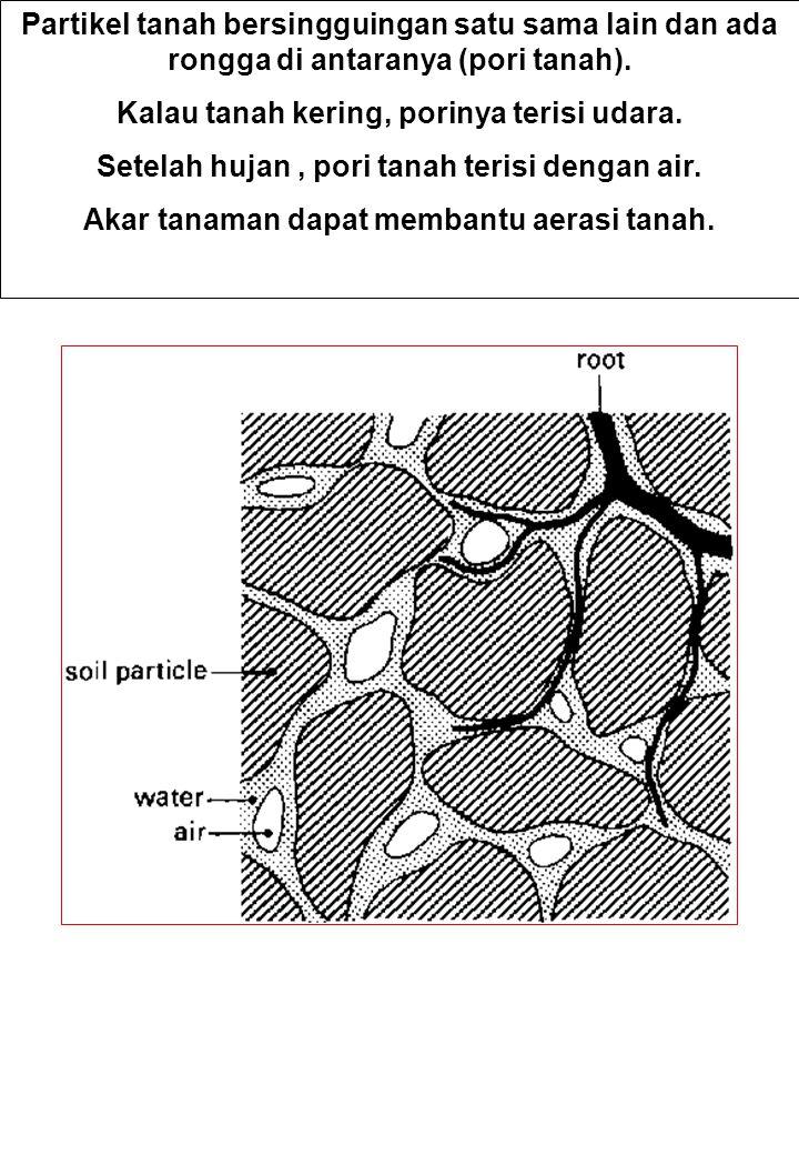 Partikel tanah bersingguingan satu sama lain dan ada rongga di antaranya (pori tanah). Kalau tanah kering, porinya terisi udara. Setelah hujan, pori t