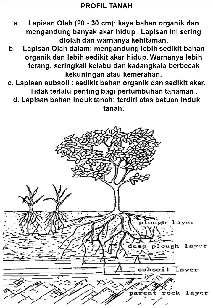 PROFIL TANAH a.Lapisan Olah (20 - 30 cm): kaya bahan organik dan mengandung banyak akar hidup. Lapisan ini sering diolah dan warnanya kehitaman. b.Lap