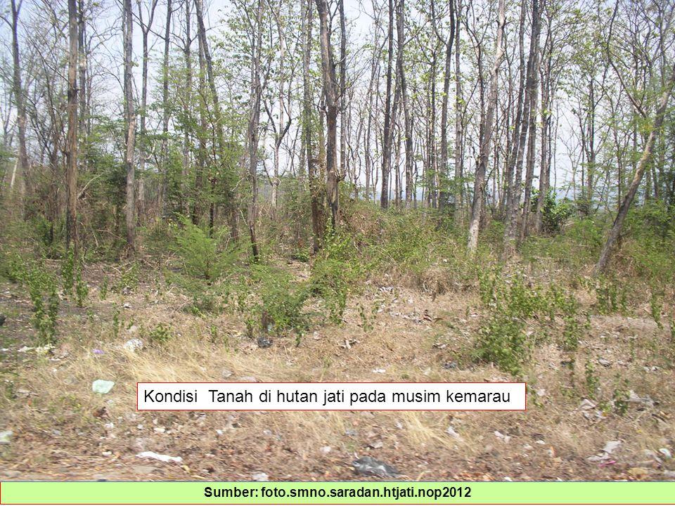 Sumber: foto.smno.saradan.htjati.nop2012 Kondisi Tanah di hutan jati pada musim kemarau