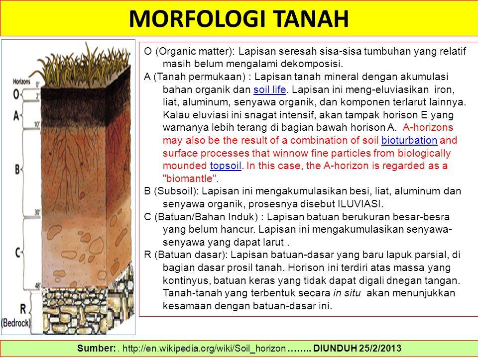 MORFOLOGI TANAH Sumber:. http://en.wikipedia.org/wiki/Soil_horizon …….. DIUNDUH 25/2/2013 O (Organic matter): Lapisan seresah sisa-sisa tumbuhan yang