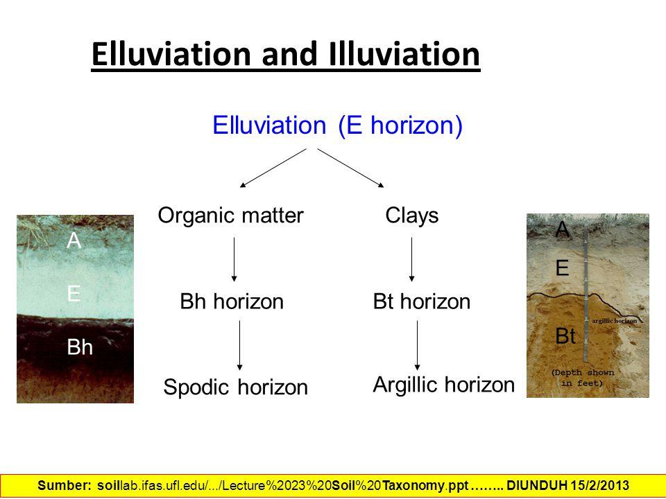 Elluviation (E horizon) Organic matterClays Spodic horizon Bh horizonBt horizon Argillic horizon Elluviation and Illuviation A E Bh A Bt E Sumber: soi