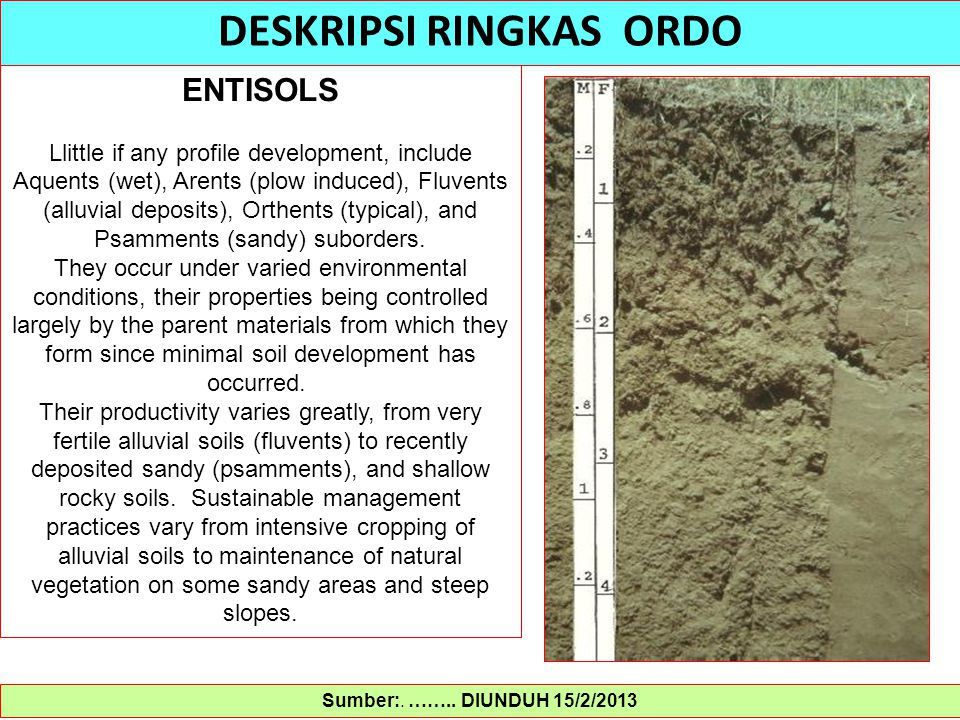 Sumber:. …….. DIUNDUH 15/2/2013 DESKRIPSI RINGKAS ORDO ENTISOLS Llittle if any profile development, include Aquents (wet), Arents (plow induced), Fluv