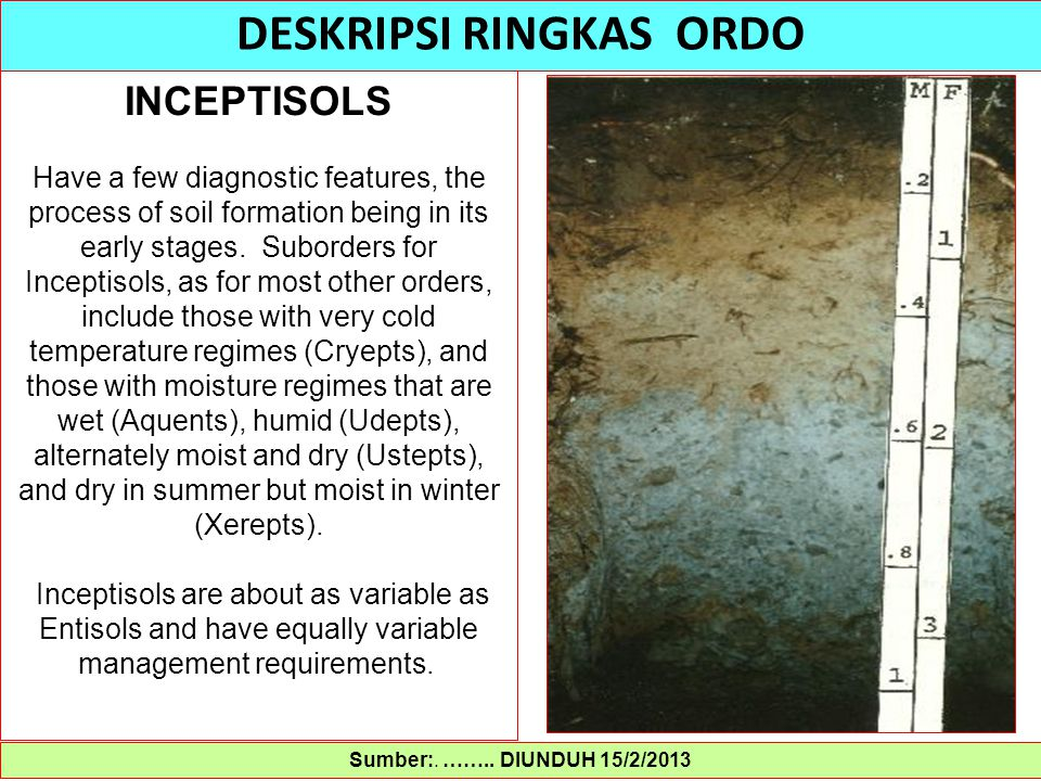 Sumber:. …….. DIUNDUH 15/2/2013 DESKRIPSI RINGKAS ORDO INCEPTISOLS Have a few diagnostic features, the process of soil formation being in its early st