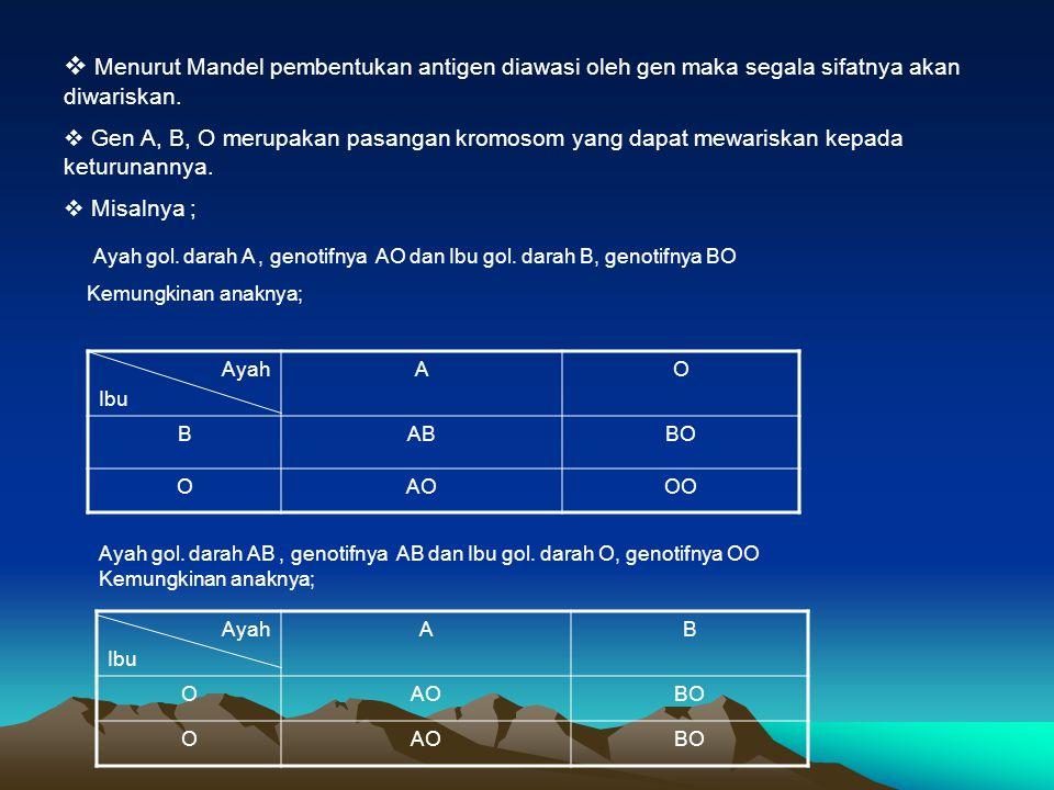  Menurut Mandel pembentukan antigen diawasi oleh gen maka segala sifatnya akan diwariskan.  Gen A, B, O merupakan pasangan kromosom yang dapat mewar