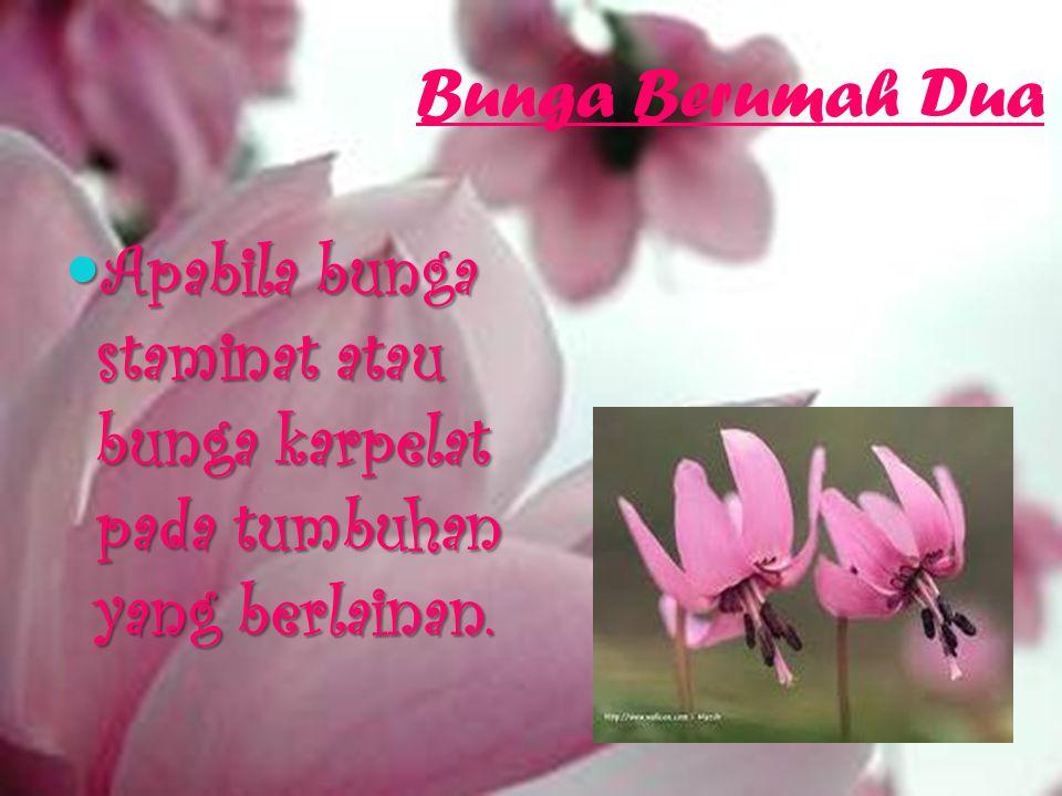 Bunga Berumah Satu Apabila bunga staminat dan bunga karpelat terdapat pada individu tumbuhan yang sama. Apabila bunga staminat dan bunga karpelat terd