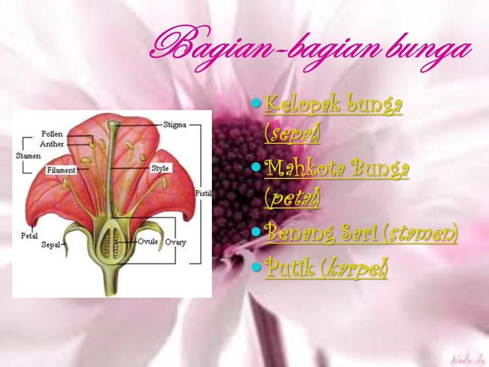 Bagian-bagian bunga Kelopak bunga (sepal) Kelopak bunga (sepal) Kelopak bunga (sepal) Kelopak bunga (sepal) Mahkota Bunga (petal) Mahkota Bunga (petal) Mahkota Bunga (petal) Mahkota Bunga (petal) Benang Sari (stamen) Benang Sari (stamen) Benang Sari (stamen) Benang Sari (stamen) Putik (karpel) Putik (karpel) Putik (karpel) Putik (karpel)