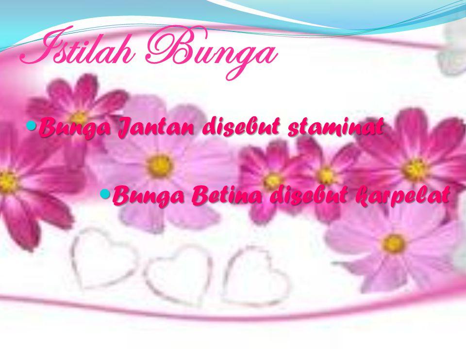 Istilah Bunga Bunga Jantan disebut staminat Bunga Jantan disebut staminat Bunga Betina disebut karpelat Bunga Betina disebut karpelat