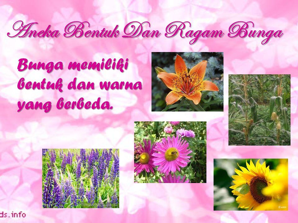 Aneka Bentuk Dan Ragam Bunga Bunga memiliki bentuk dan warna yang berbeda.