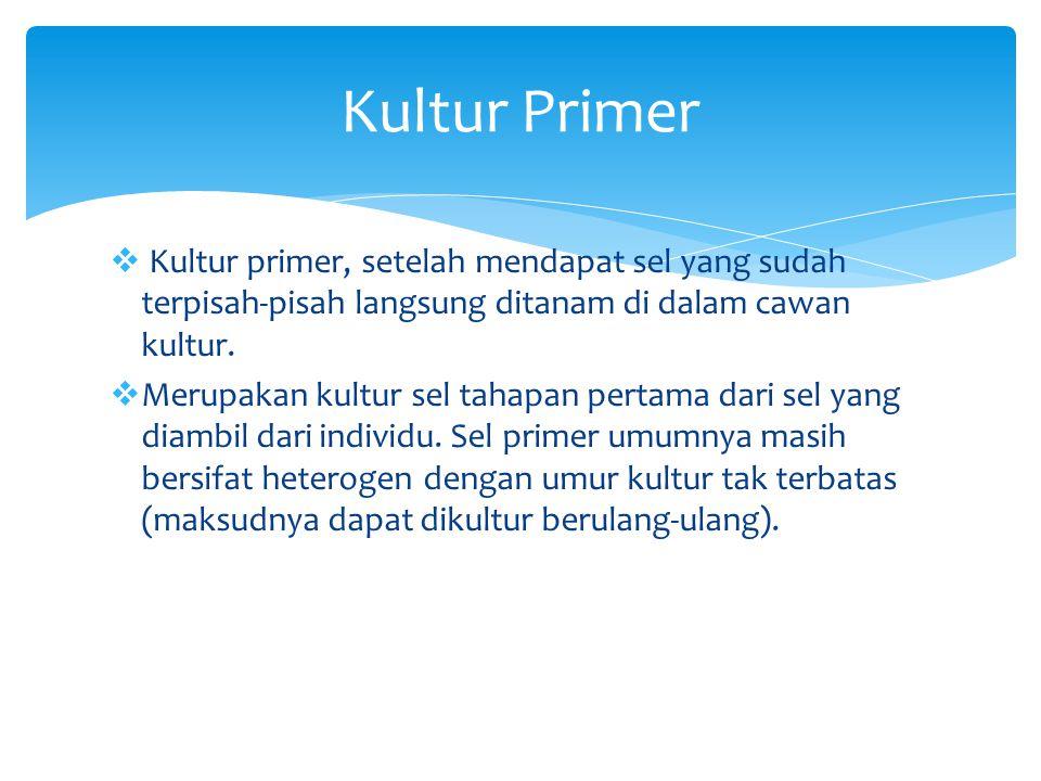  Kultur primer, setelah mendapat sel yang sudah terpisah-pisah langsung ditanam di dalam cawan kultur.  Merupakan kultur sel tahapan pertama dari se