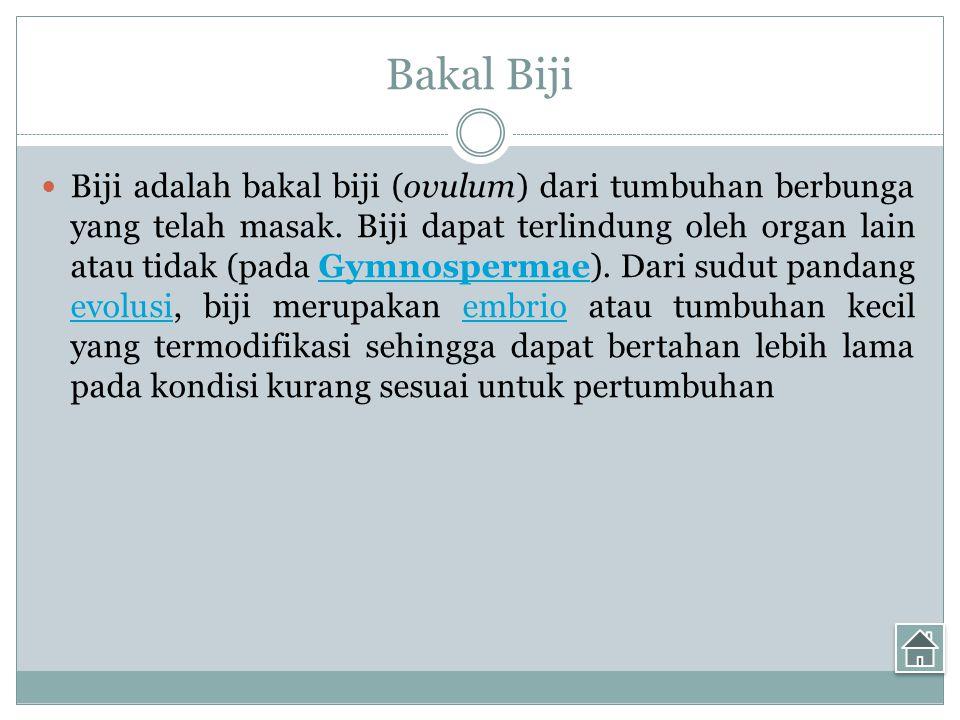 Bakal Biji Biji adalah bakal biji (ovulum) dari tumbuhan berbunga yang telah masak.