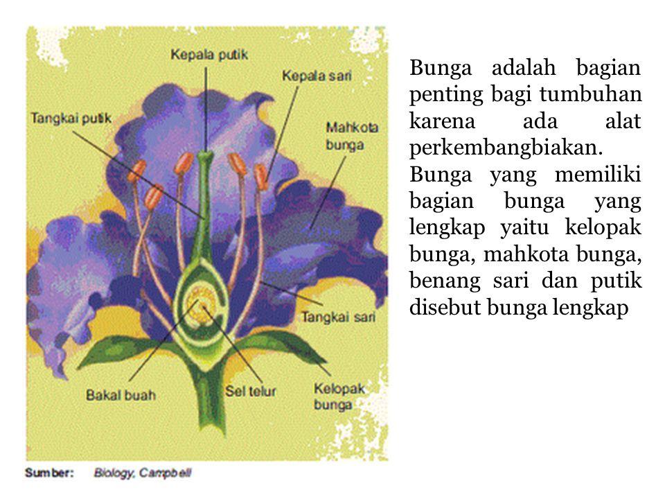 Bunga adalah bagian penting bagi tumbuhan karena ada alat perkembangbiakan.