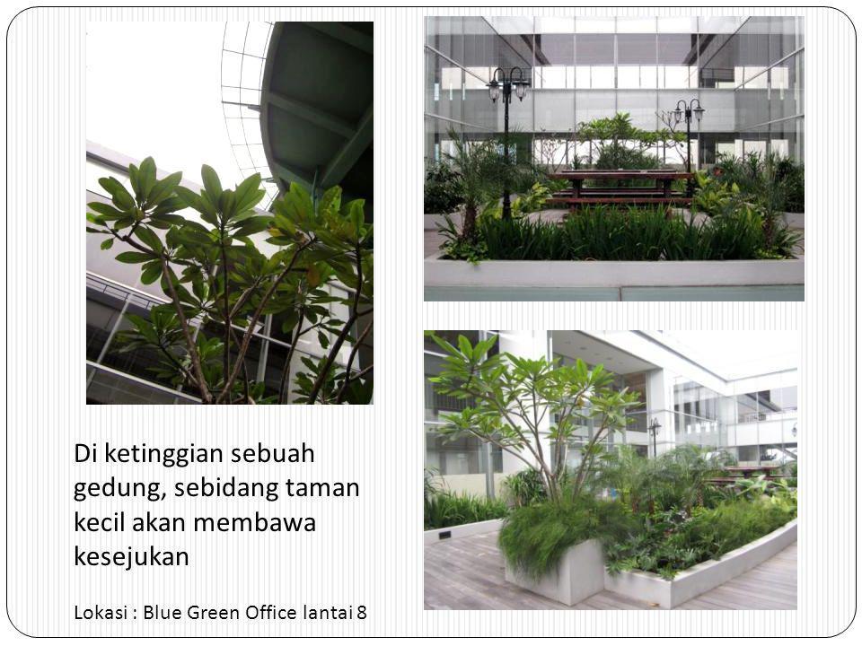 Di ketinggian sebuah gedung, sebidang taman kecil akan membawa kesejukan Lokasi : Blue Green Office lantai 8