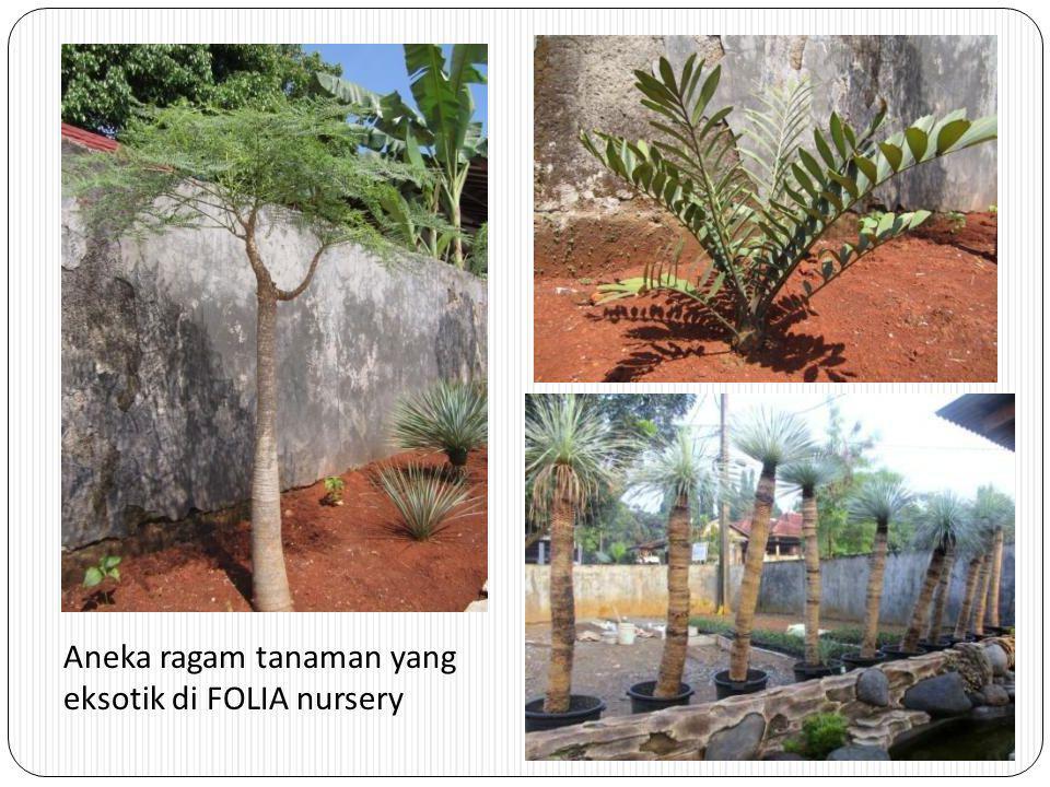Aneka ragam tanaman yang eksotik di FOLIA nursery