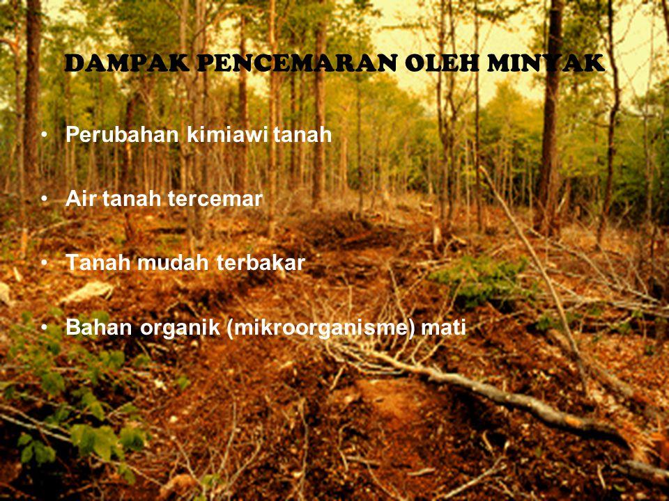 DAMPAK PENCEMARAN OLEH MINYAK Perubahan kimiawi tanah Air tanah tercemar Tanah mudah terbakar Bahan organik (mikroorganisme) mati