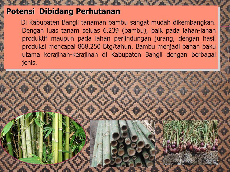 Potensi Dibidang Perhutanan Di Kabupaten Bangli tanaman bambu sangat mudah dikembangkan. Dengan luas tanam seluas 6.239 (bambu), baik pada lahan-lahan