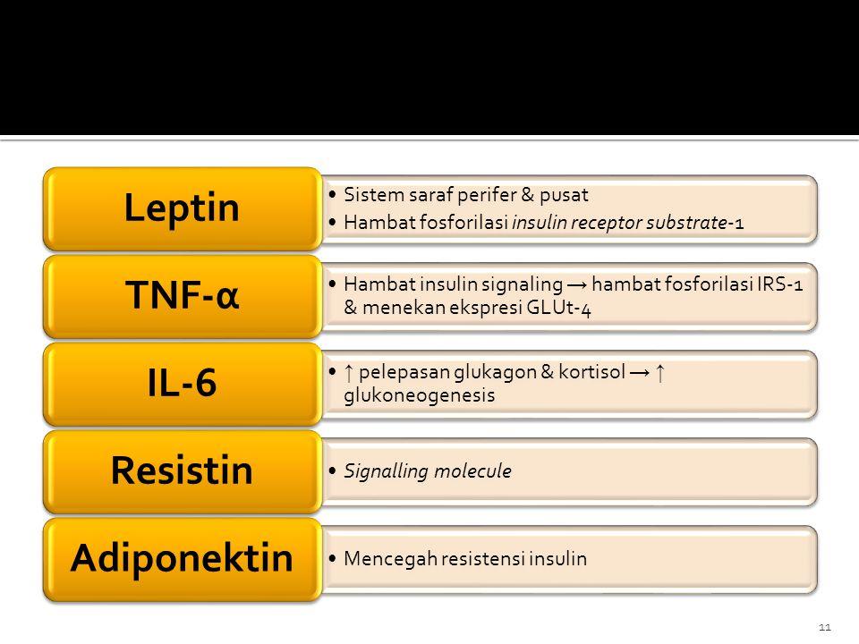 Sistem saraf perifer & pusat Hambat fosforilasi insulin receptor substrate-1 Leptin Hambat insulin signaling → hambat fosforilasi IRS-1 & menekan eksp